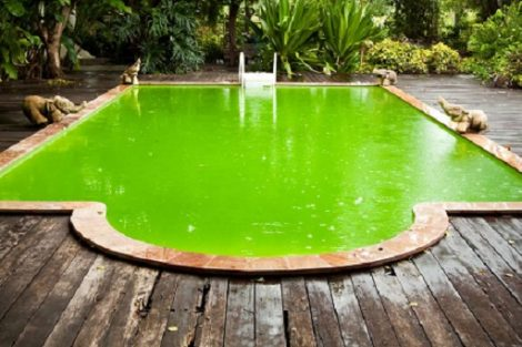How to get algae out of pool without a vacuum